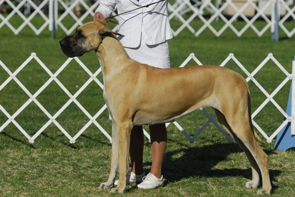 Charakter Dogge