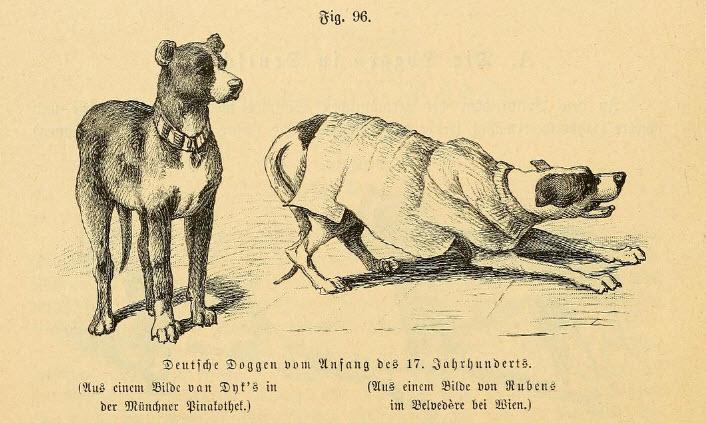 Deutsche Doggen vom Anfang des 17. Jahrhunderts.