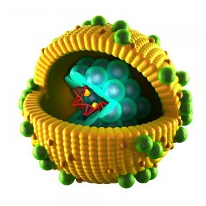 Die Hepatitisviren lösen eine Leberentzündung aus, die leider nur symptomatisch behandelt werden kann. Ungeimpfte Welpen und junge Hunde können innerhalb weniger Stunden durch die Infektion versterben.