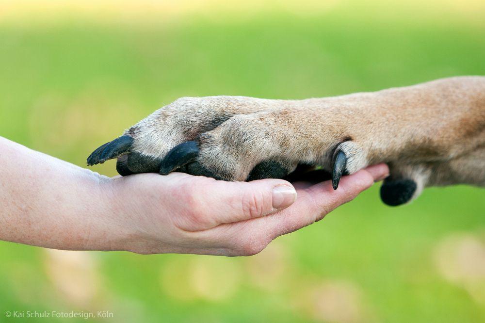 Pfotenpflege Dogge