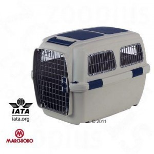 Transportbox für Dogge