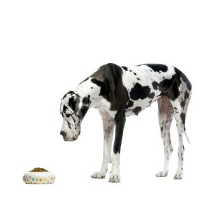 Wieviel Futter Dogge