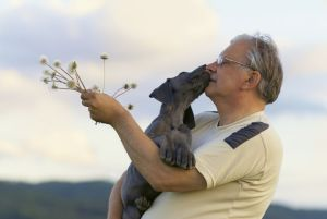 Züchter Dogge