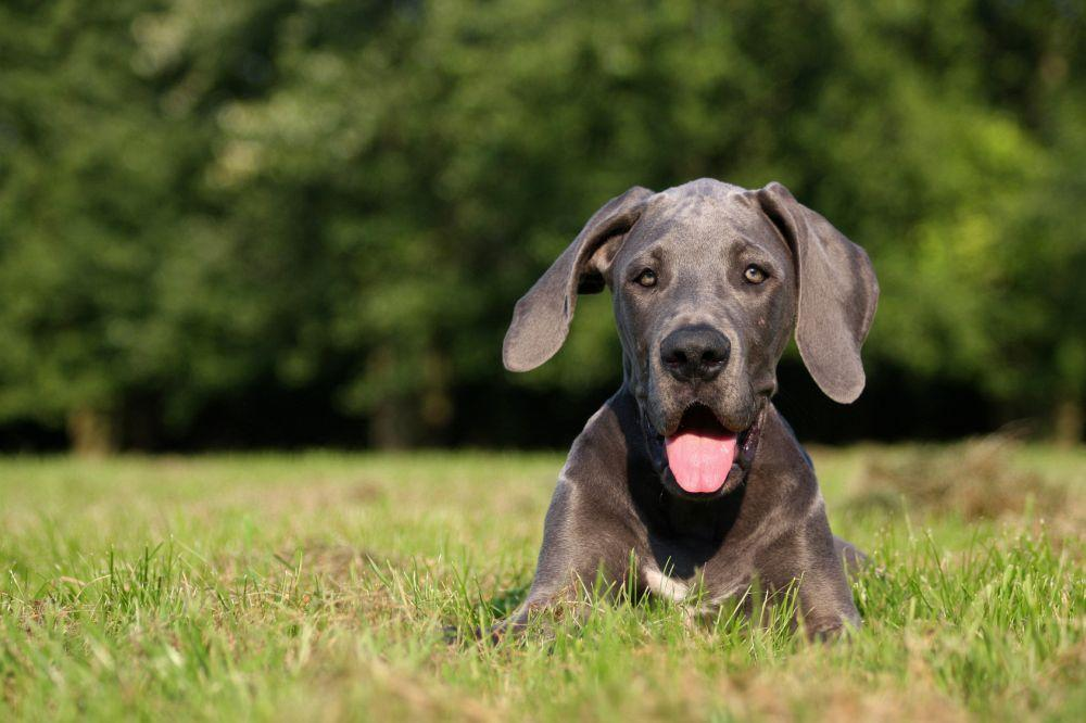 Zeckenschutz Dogge