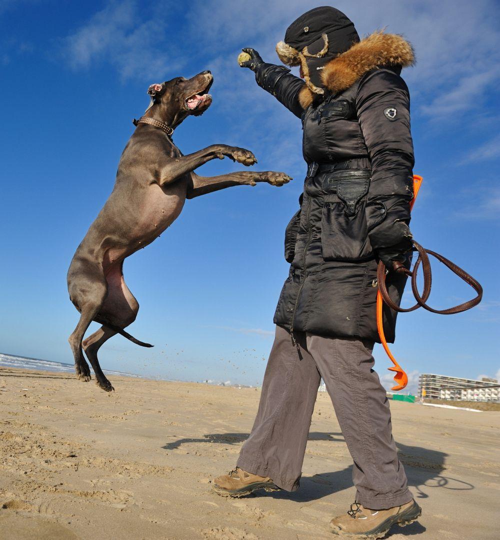 Wo kann ich mit der Dogge in den Urlaub gehen?
