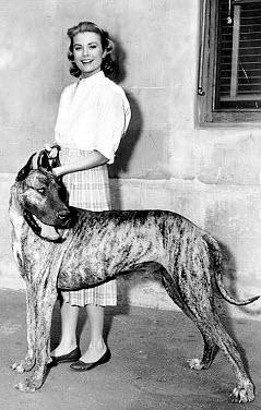 Grace Kelly mit ihrer Dogge