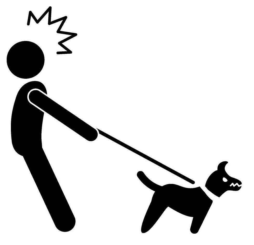Dogge an Leine gewöhnen