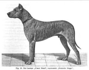 Ulmer Hund - Deutsche Dogge