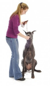 Spielregeln für die Dogge Beschäftigung