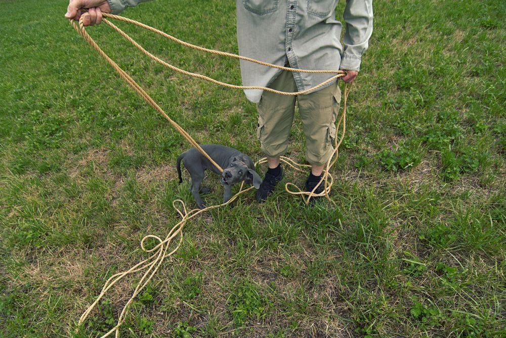 Wie kann ich meine Dogge Welpen beschäftigen?