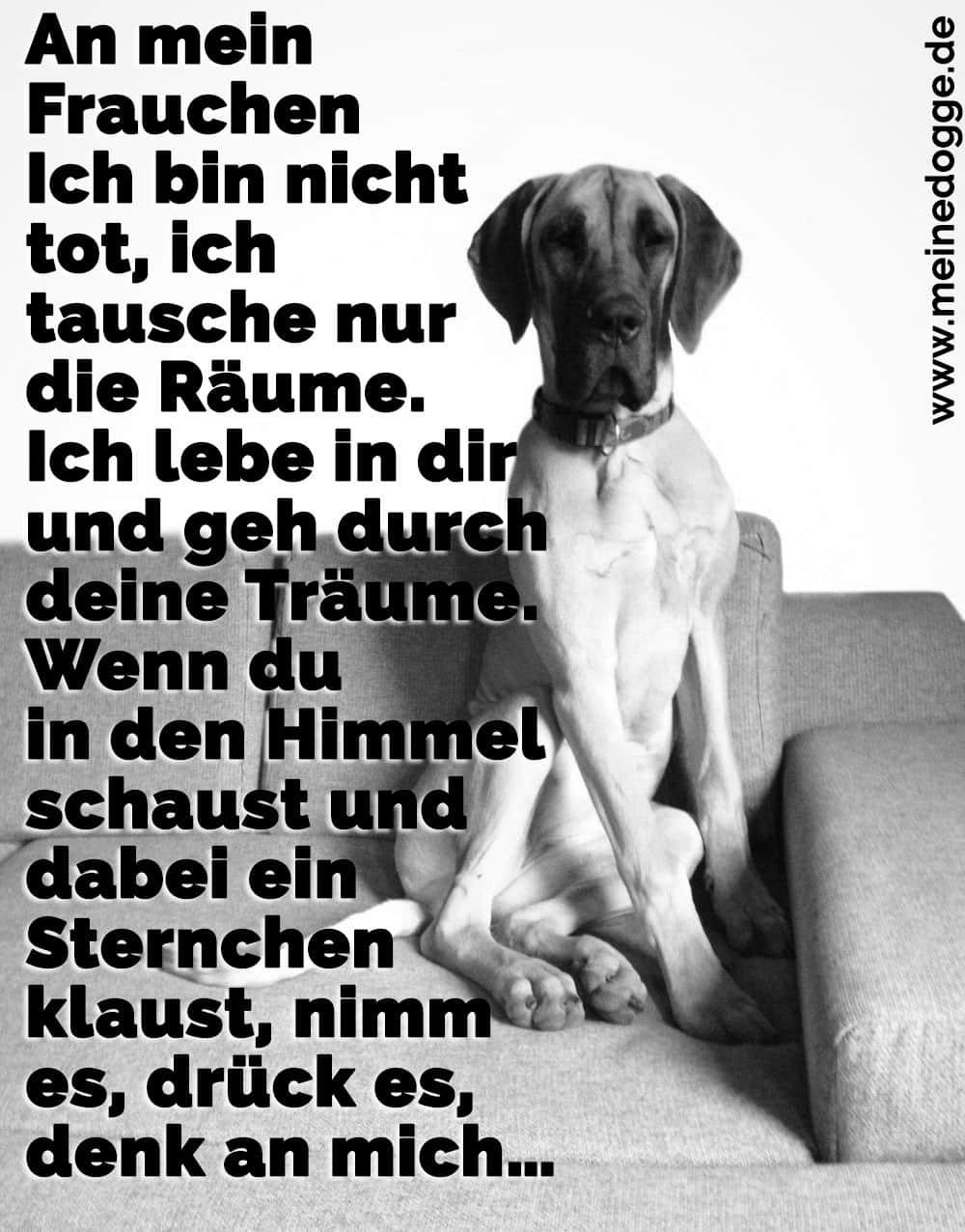 Eine Dogge sitzt auf dem Sofa