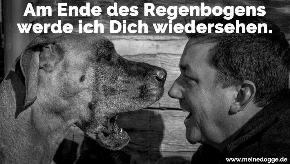 Ein glücklicher Mann mit seine Dogge