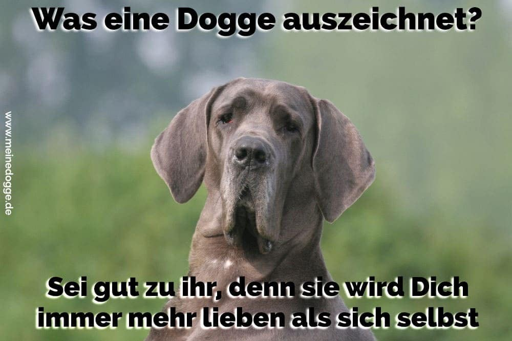 Eine Dogge im Grass