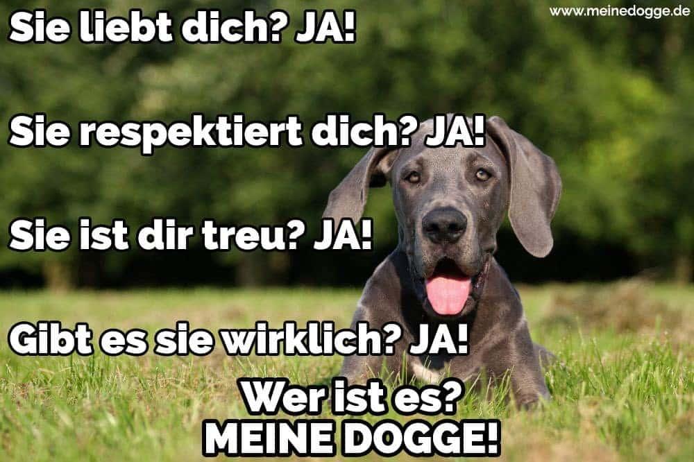 Eine Dogge liegt im Grass