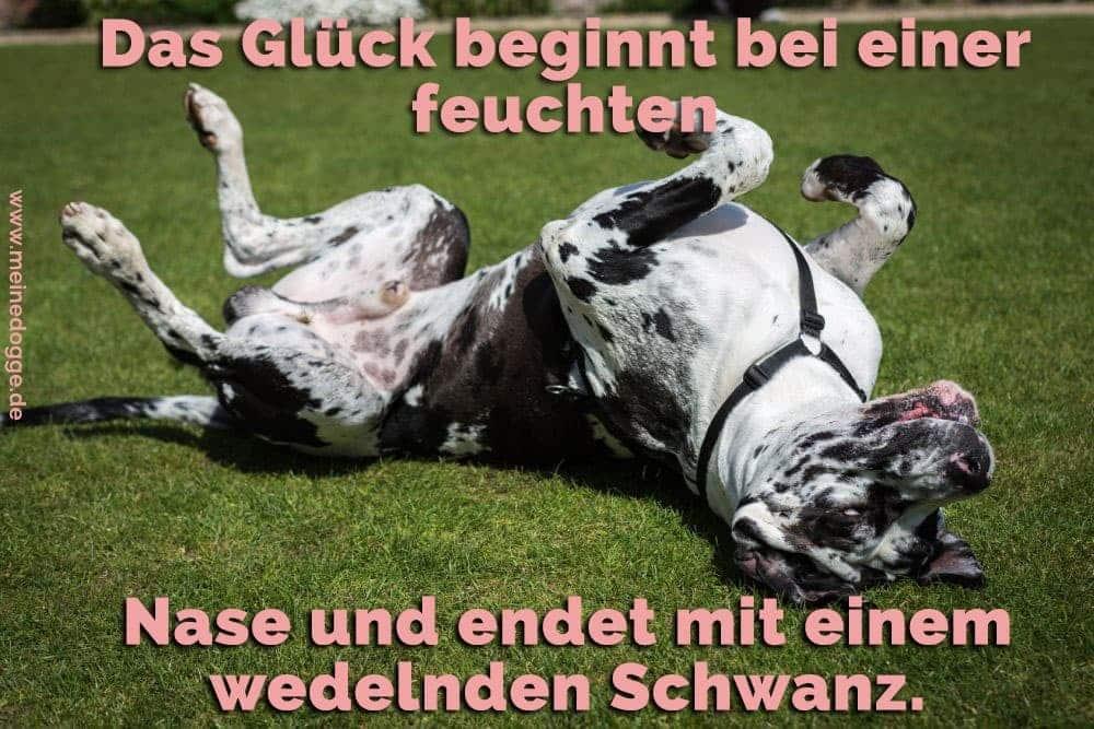 Eine Dogge spielt im Grass