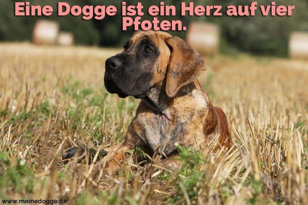Eine Dogge im Gartem