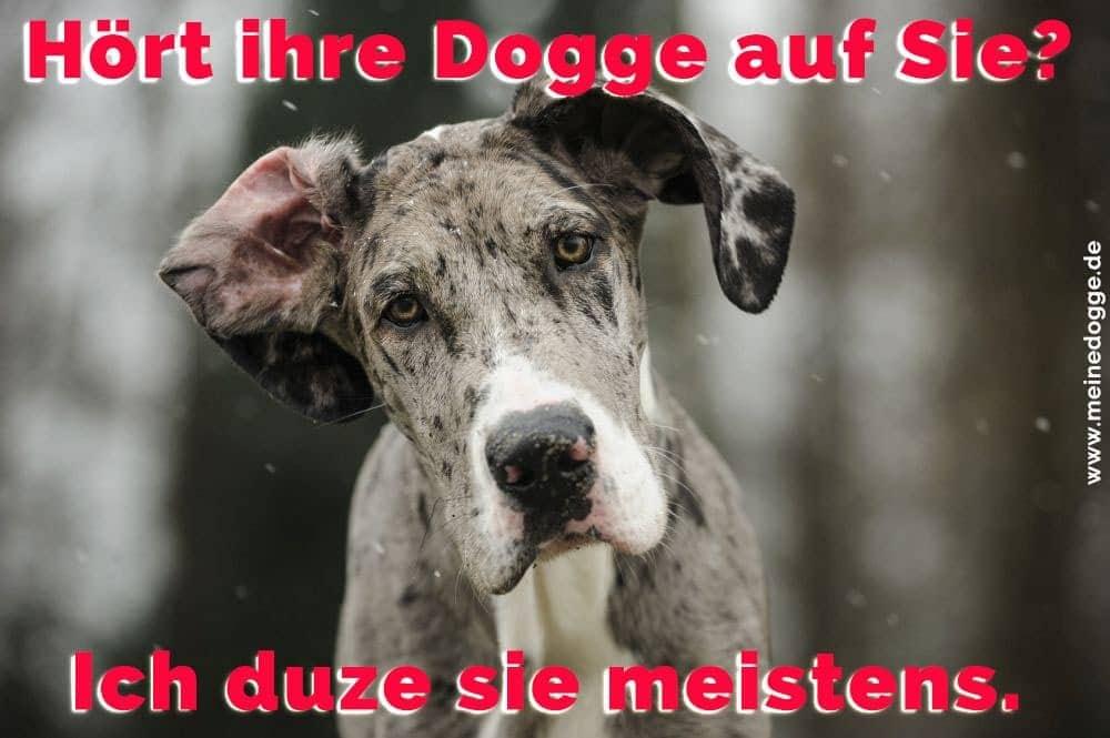 Eine traurige Dogge