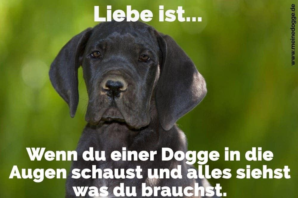 Eine Dogge mit traurigem Blick