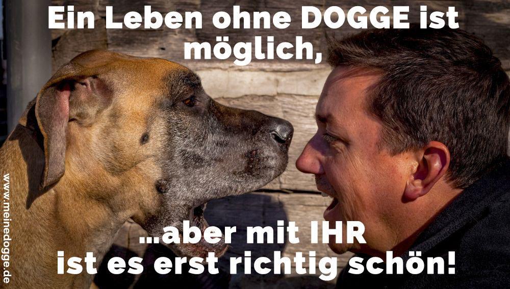 Eine Dogge lacht mit seinem Besitzer