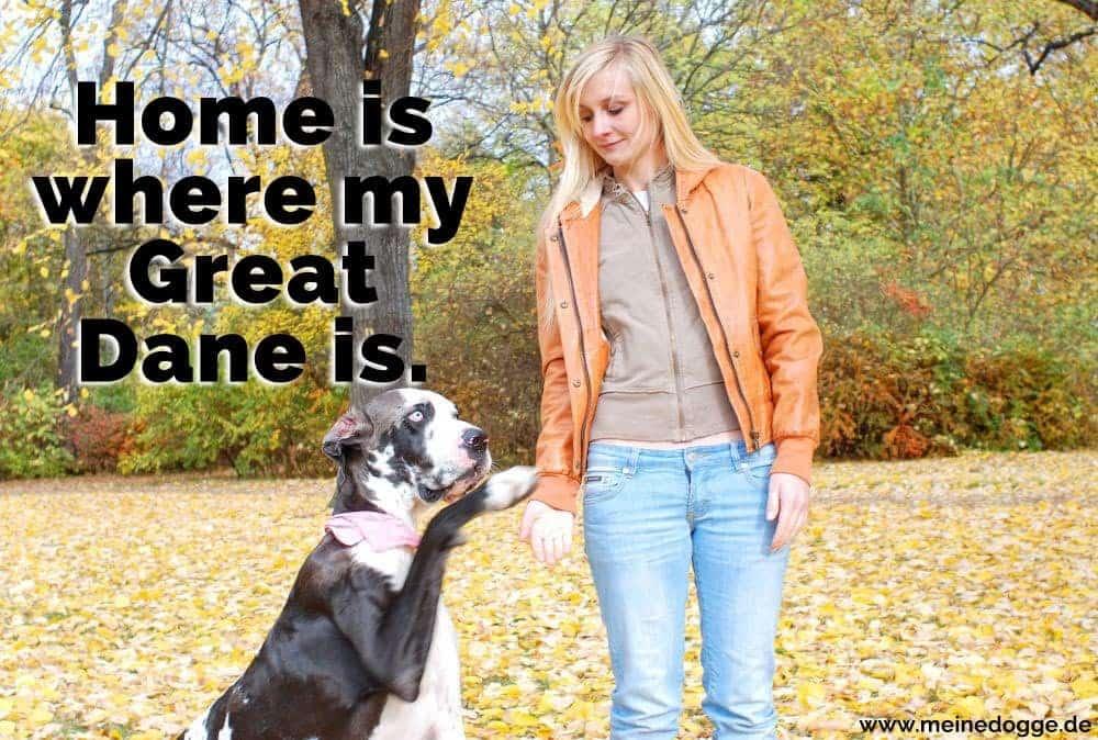 Eine Frau hält die Pfote einer Dogge