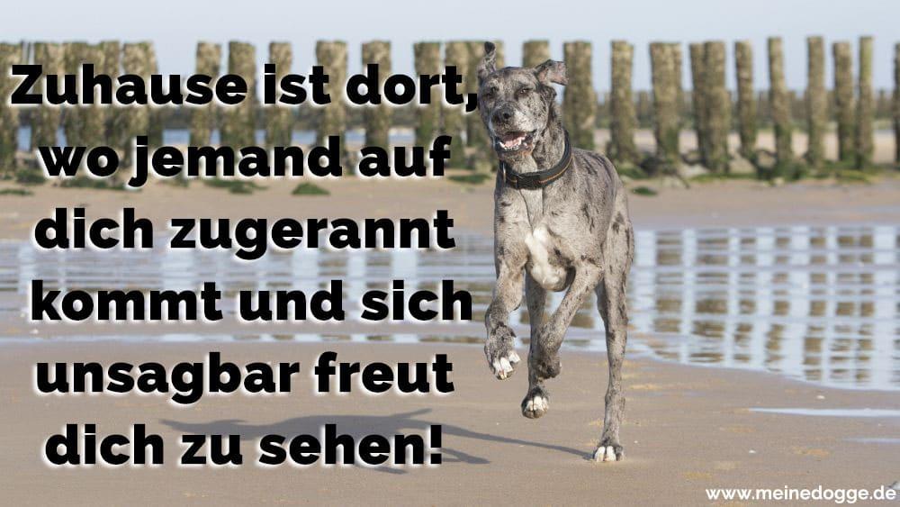 Eine Dogge rennt am Strand