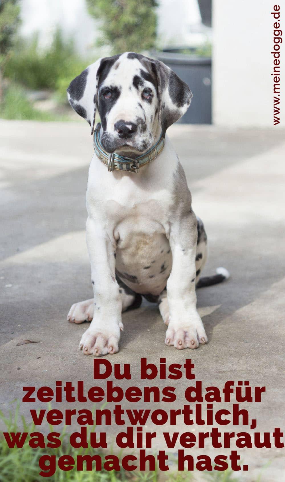 Eine Welpen Dogge