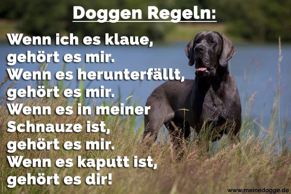 Dogge im Gras