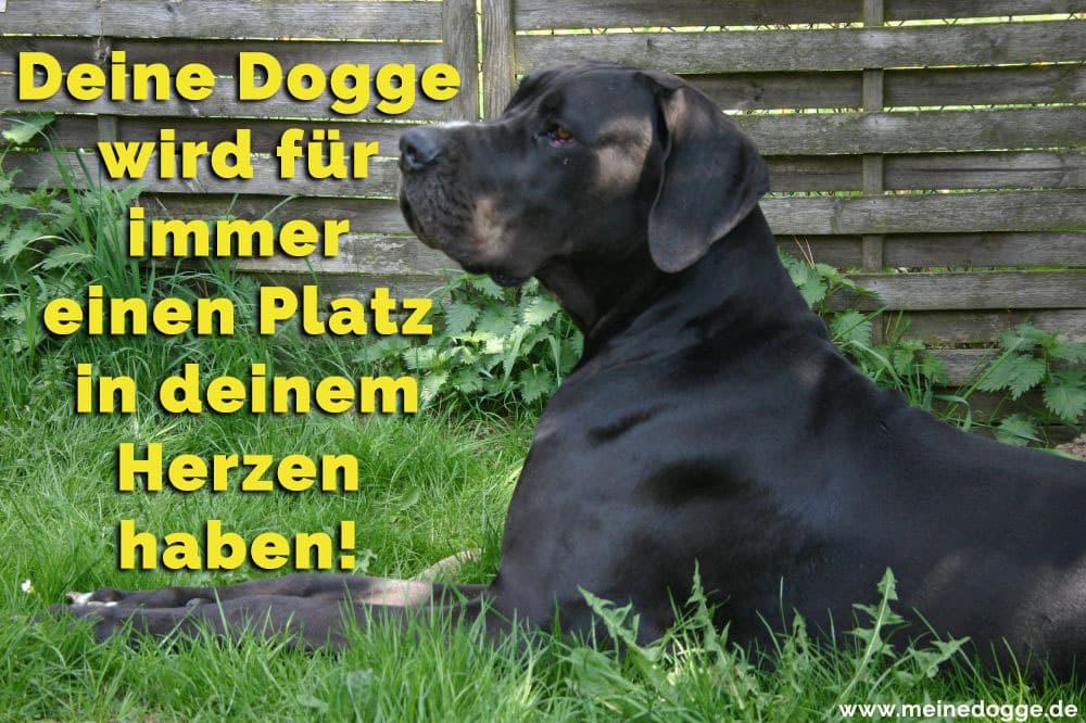Eine Dogge liegt im Gras