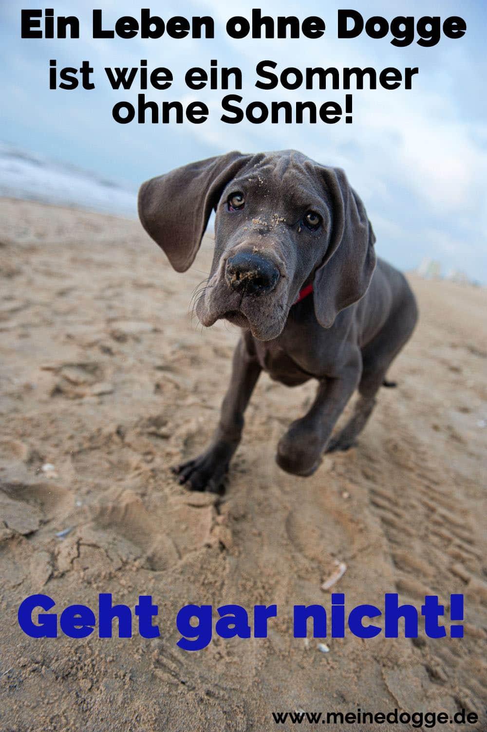 Eine Dogge am Strand
