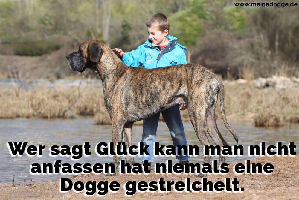 Ein Jung streichelt seine Dogge